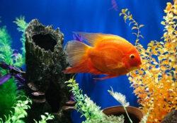 Comment choisir sa pompe pour aquarium