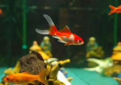 Comment installer un aquarium